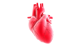 """""""Reprogrammed"""" Stem Cells Approved to Mend Human Hearts in Pilot Study"""