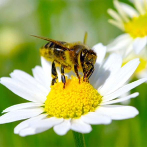 BeeSpotter