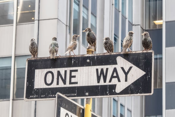 The Delight of Watching Birds on the Streets of New York