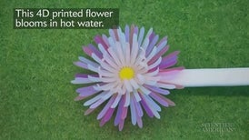 4-D Printed Shapes Bloom in Heat