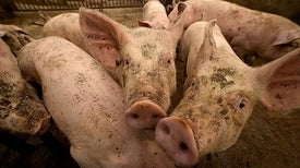 Resistance to Last-Ditch Antibiotic Has Spread Farther Than Anticipated