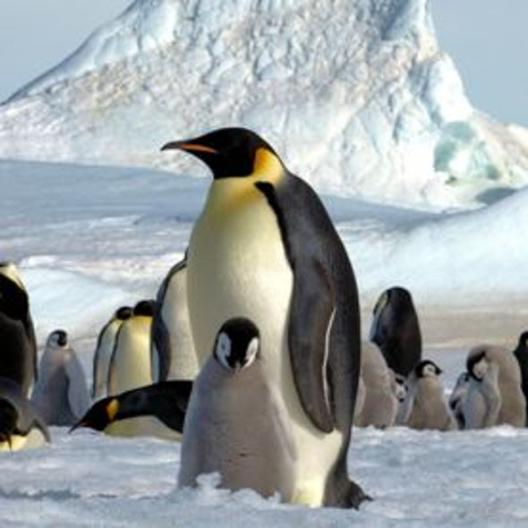 Penguins from Space: A New Satellite Census Doubles the Known Population of Emperors