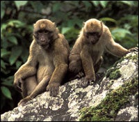 New Monkey Species Discovered in India
