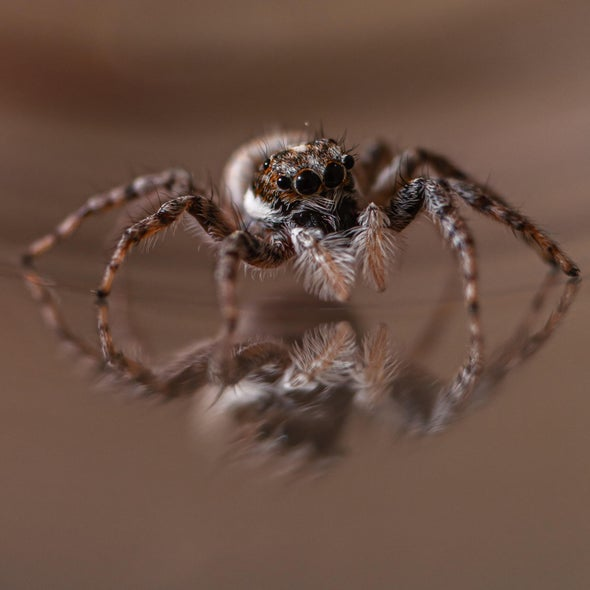 Spiders on Tiny Treadmills Give Scientists the Side-Eye