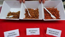 Edible Insects Have More Iron Than Sirloin Beef