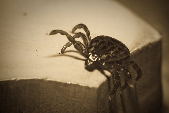 Tests for Lyme Disease Miss Early Cases—but a New Approach Might Help