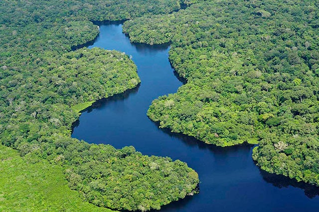 How to Help Prevent Cutting Down the Amazon