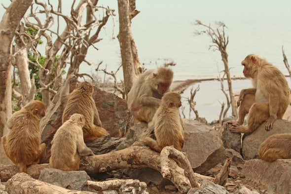 What Monkeys Can Teach Humans about Resilience after Disaster