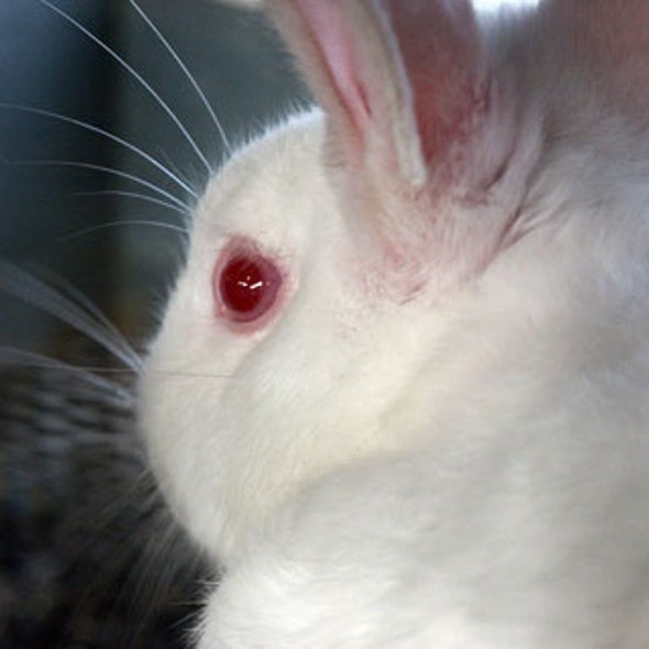 Do Cosmetic Companies Still Test on Live Animals?
