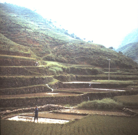 Does Rice Farming Lead to Collectivist Thinking?