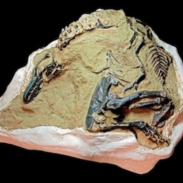 Dueling Dinosaur Fossils Could Break Record at Auction