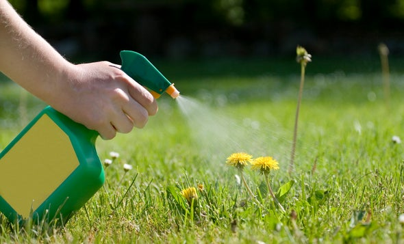 Weed-Whacking Herbicide Proves Deadly to Human Cells