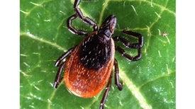 New Cause for Lyme Disease Complicates Already Murky Diagnosis