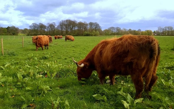 Fluctuating Rainfall Could Hurt Grazing Regions