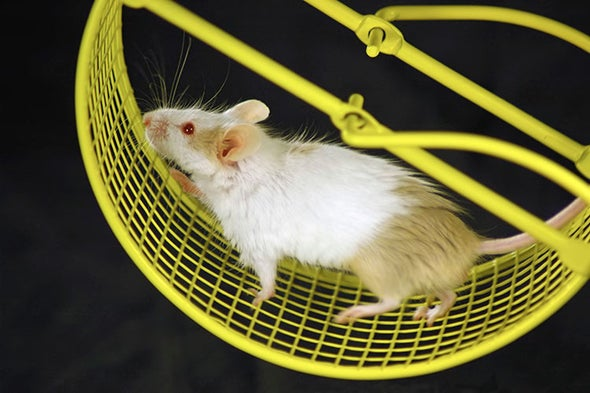 Flexible Spinal Implants Help Paralyzed Rats Walk Again