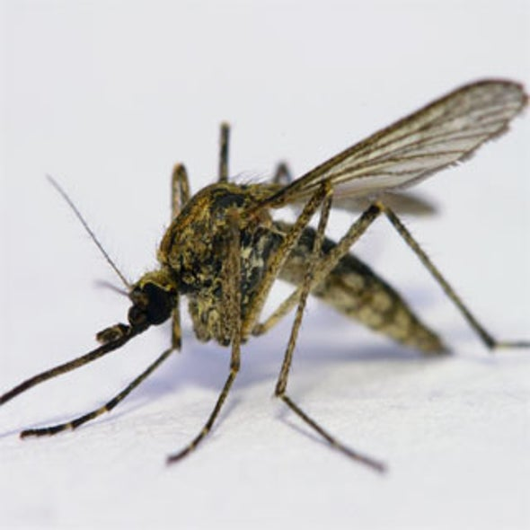 A 'Flower' That Delivers Disease-Killing Treatments to Mosquitoes