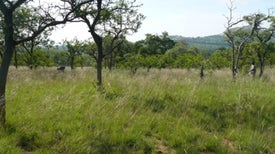 When It Comes to Conservation, Tropical Grasslands Have an Identity Problem [Slide Show]