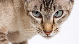 How House Cats Evolved