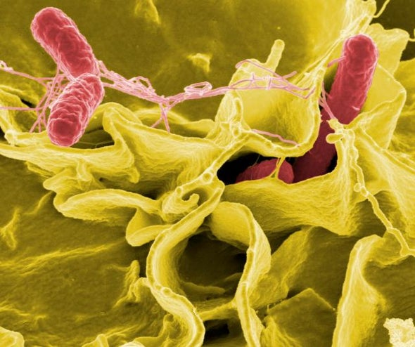 A Radical Approach against Superbugs: Learn to Live with Them