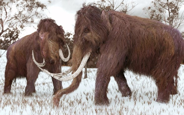 See-Through Hair and Awkward Sexual Problems: The Woolly Mammoth's Bitter End