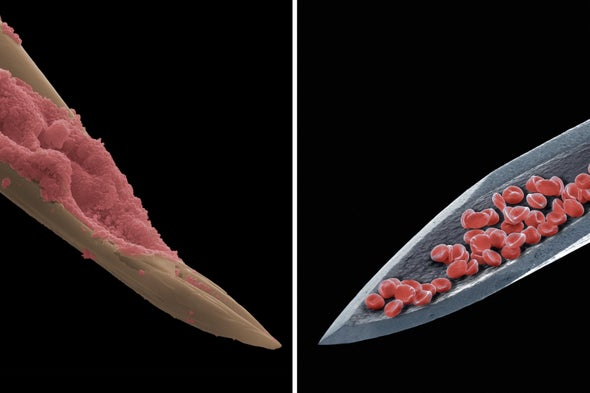 Mosquitoes Stab Animals with a Syringelike Proboscis