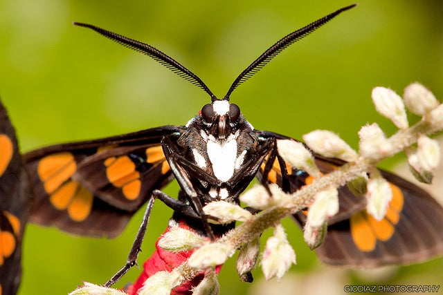 Moths Inspire Antireflective Coating that Could Help Devices Capture Light