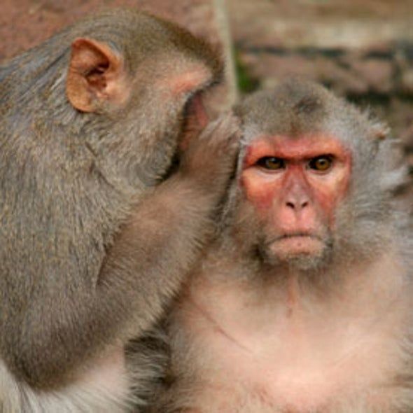Monkey Brain Area Keeps Count of Kindnesses