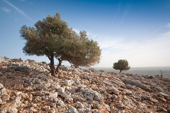 Italian Scientists under Investigation after Olive-Tree Deaths