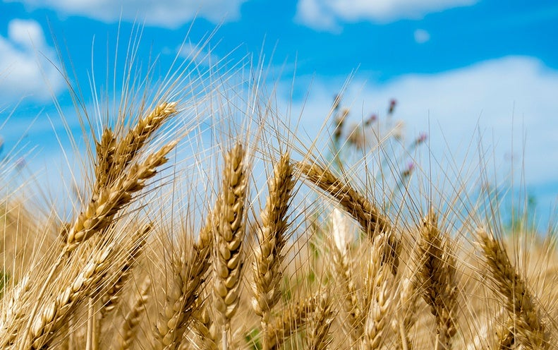 International Food Crops Could Vanish as Groundwater Disappears