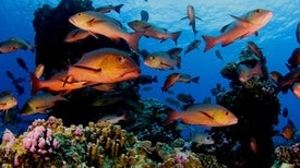 Despite Many Threats, Some Coral Reefs Are Thriving