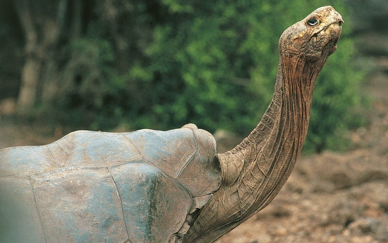 The Galápagos Tortoise Next Door