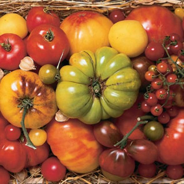 Slide Show: Amy Goldman's Heirloom Tomatoes