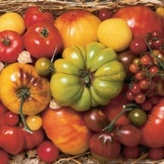 Slide Show: Amy Goldman's Heirloom Tomatoes