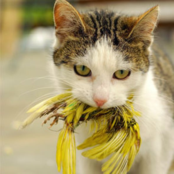 Unlike Sylvester and Tweety, Cats Usually Get Their Birds--Up to 3.7 Billion of Them