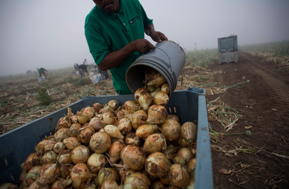Precarious Life of Texas Farmworkers Becomes Riskier with Warming