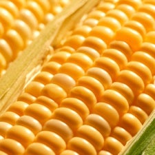 Molecular Breeding Makes Crops Hardier and More Nutritious