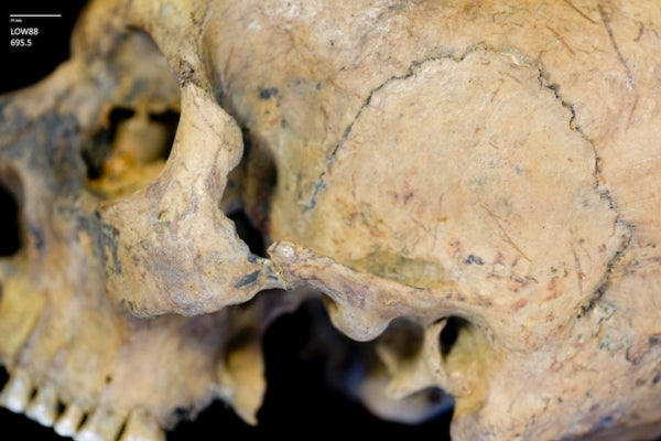 Mystery Trove of British Skulls May Have Belonged to Roman Gladiators