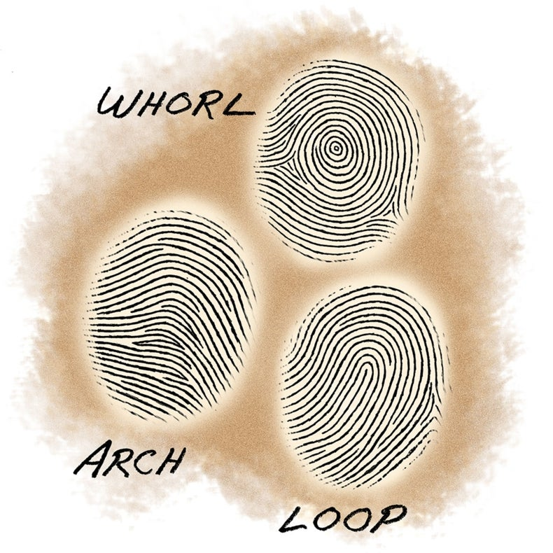 Succession Science: Are Fingerprint Patterns Inherited ...