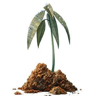 Regrowing Borneo's Rainforest--Tree by Tree