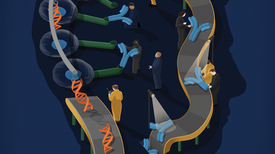 The Genetic Shortcut to Antibody Drugs