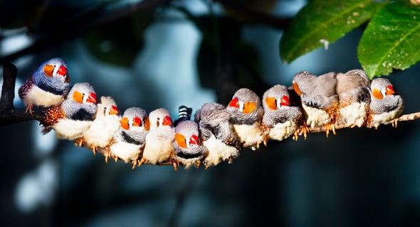 Implanting Memories in Birds Reveals How Learning Happens