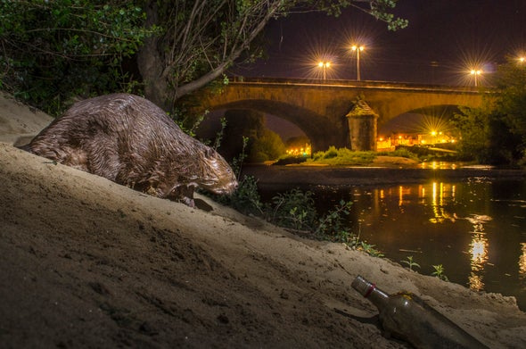 Humans Are Driving Other Mammals to Become More Nocturnal
