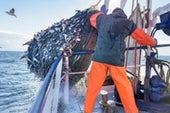 Activists Open an Online Window onto the Global Fishing Fleet