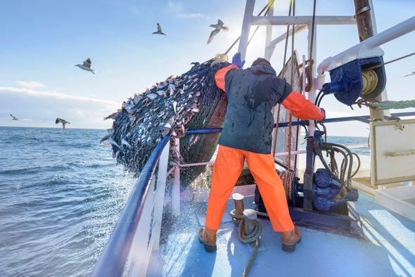 Activists Open an Online Window onto the Global Fishing Fleet