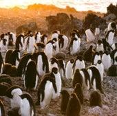 Penguin Peril, 2000