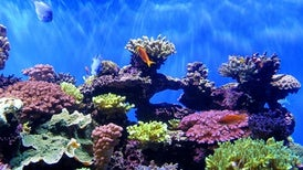 "Hawaii Seeks to Ban ""Reef-Unfriendly"" Sunscreen"