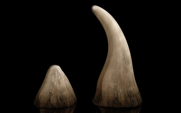 """The Hard Truth about the Rhino Horn """"Aphrodisiac"""" Market"""