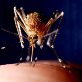 DDT and Malaria Prevention: Addressing the Paradox