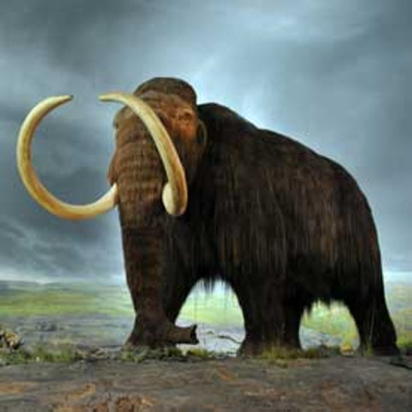 Produce Woolly Mammoth Stem Cells, Says Creator of Dolly the Sheep