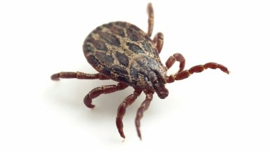 Long-Forgotten Research Unearths New Mystery about Lyme Disease